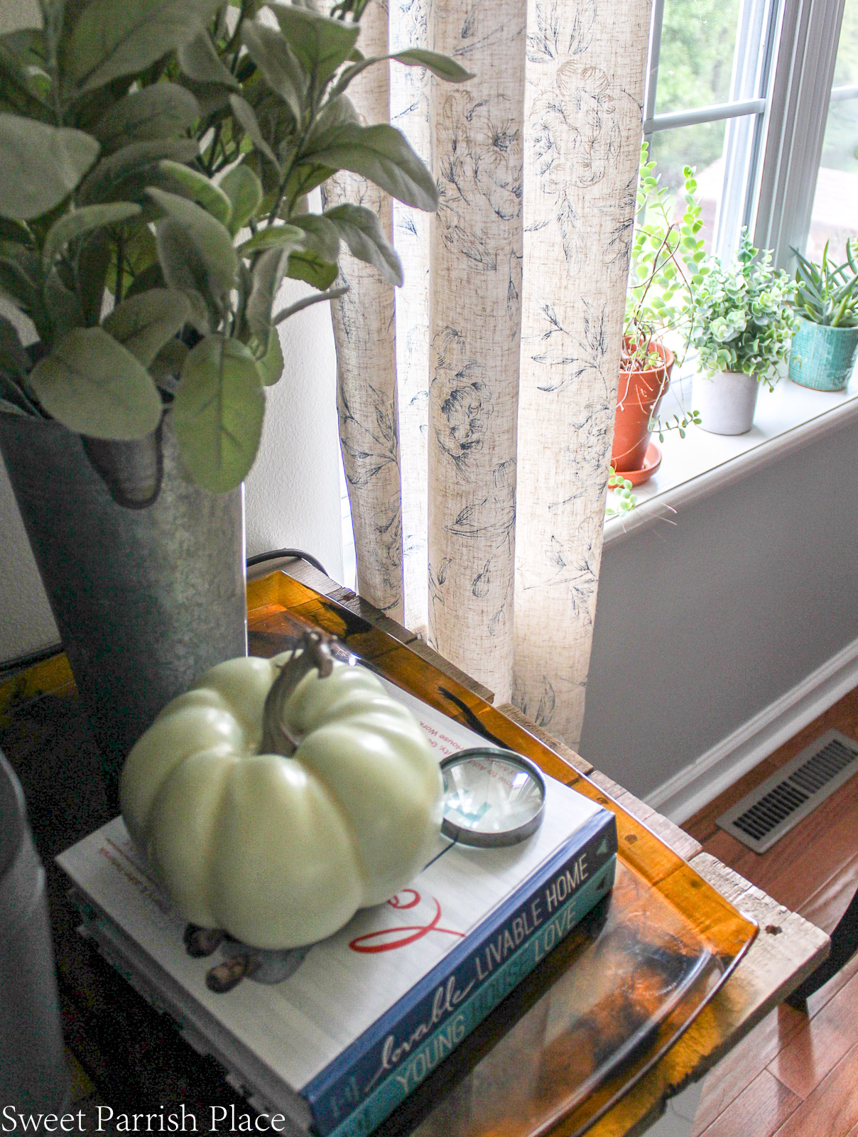 succulents in window sill